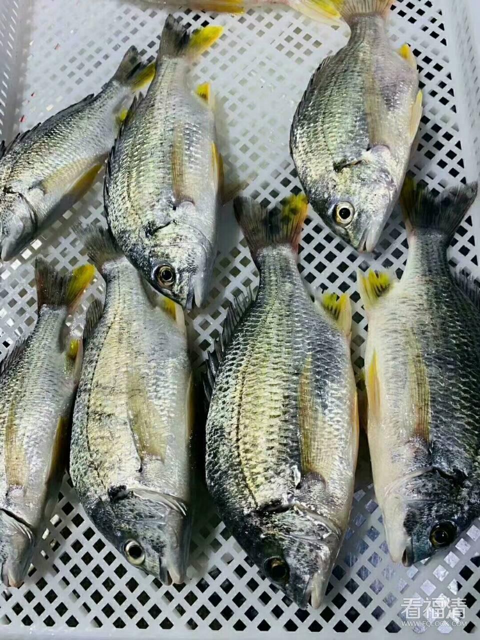 野生海鲜,各种天然鱼虾蟹都有,非常新鲜