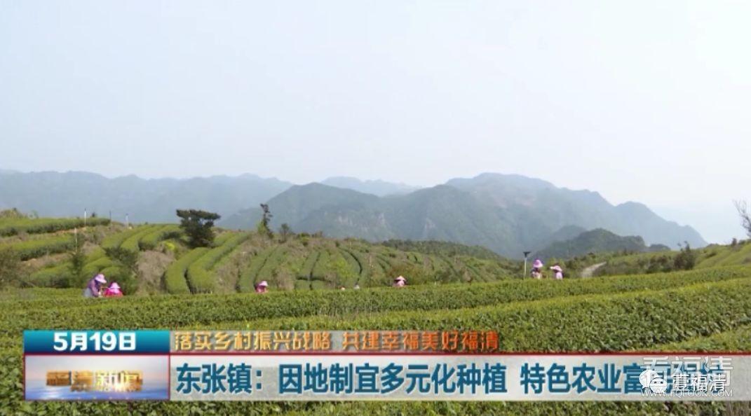 福清这个镇走出了特色农业发展之路...