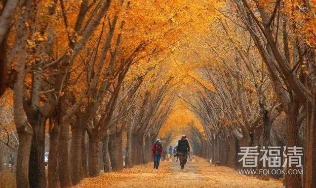 中国15个最美银杏观赏地,最美的时候到了