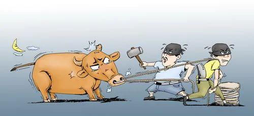 两名小贼偷牛卖肉,流窜福清、长乐等地作案7起!