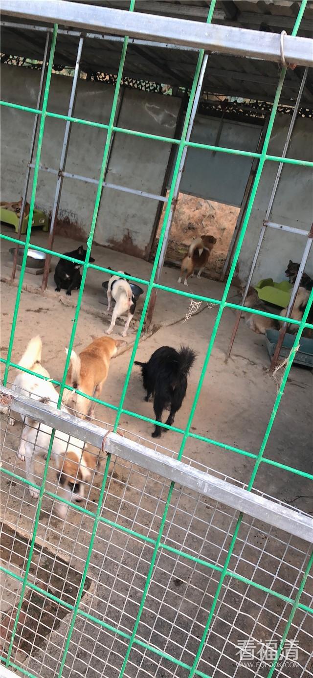 关爱动物,紧急求救!救救福清这些可怜的流浪狗吧