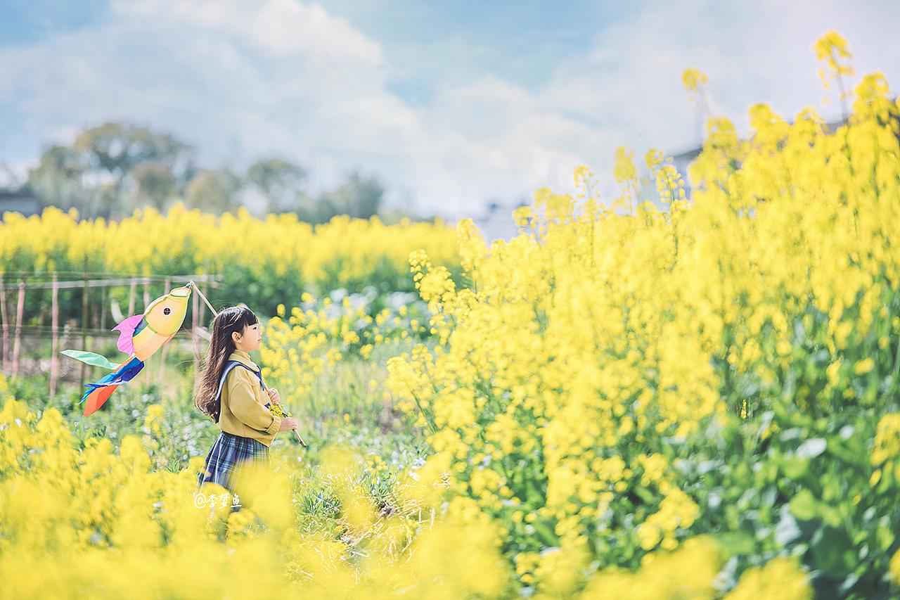 開滿油菜花的田野